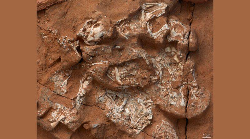 Estudio revela que los primeros dinosaurios ponían huevos blandos