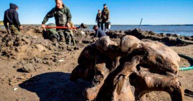 Hallan esqueleto completo de mamut en un lago del Ártico de Rusia