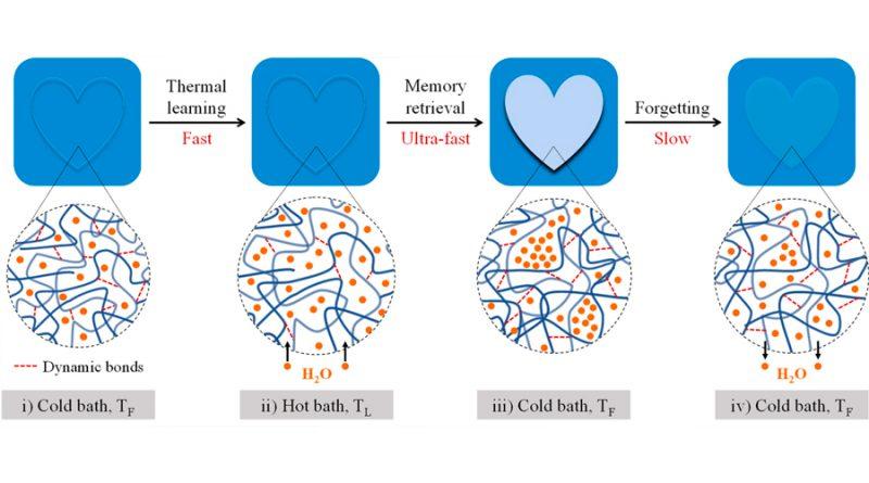 Un hidrogel imita la capacidad de memoria del cerebro humano