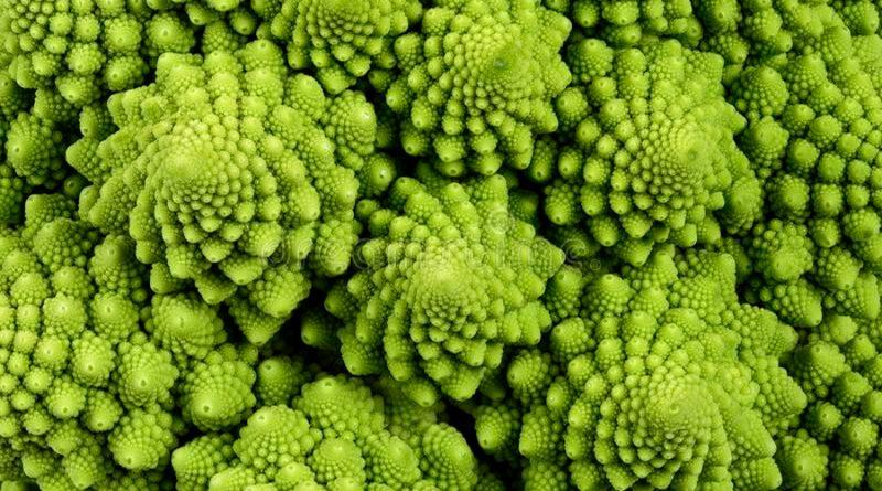 Fractales: el código geométrico de la naturaleza