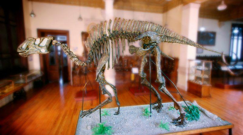 Las huellas que llevaron a Luis Espinosa a descubrir al primer dinosaurio mexicano