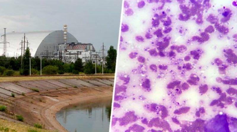 """Científicos descubren hongo que se """"come"""" la radiación de Chernobyl"""