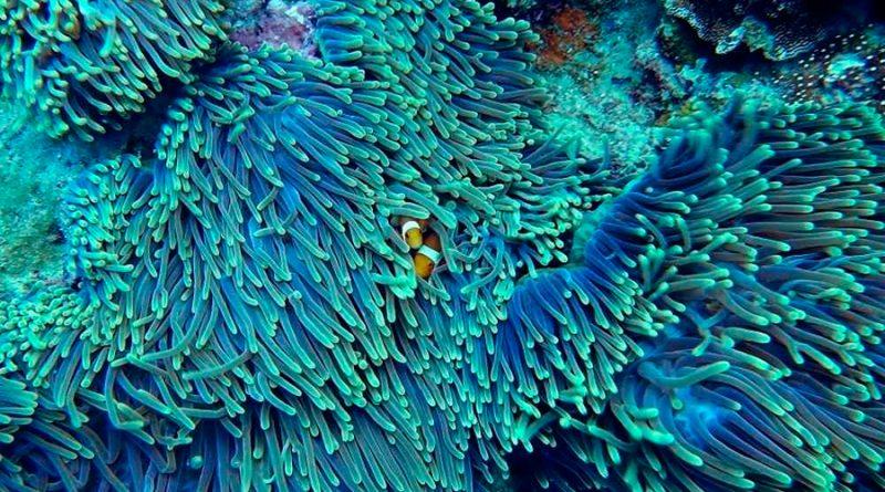 Científicos israelíes descubren patrón de movimiento de los tentáculos del coral