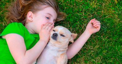 Hablar con los perros es sano; esto dice la ciencia al respecto
