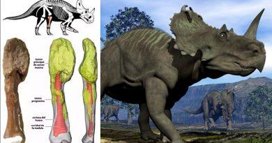 Detectan cáncer en peroné de dinosaurio de alrededor de 77 millones de años
