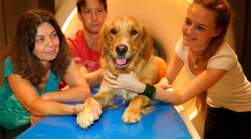 Similitudes asombrosas de procesamiento auditivo del habla entre el ser humano y el perro