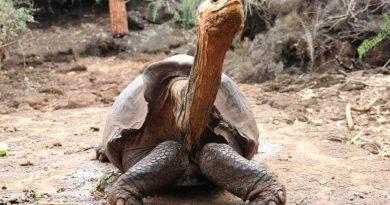 Investigadores argentinos descubren que las tortugas antes no podían esconder su cabeza dentro del caparazón
