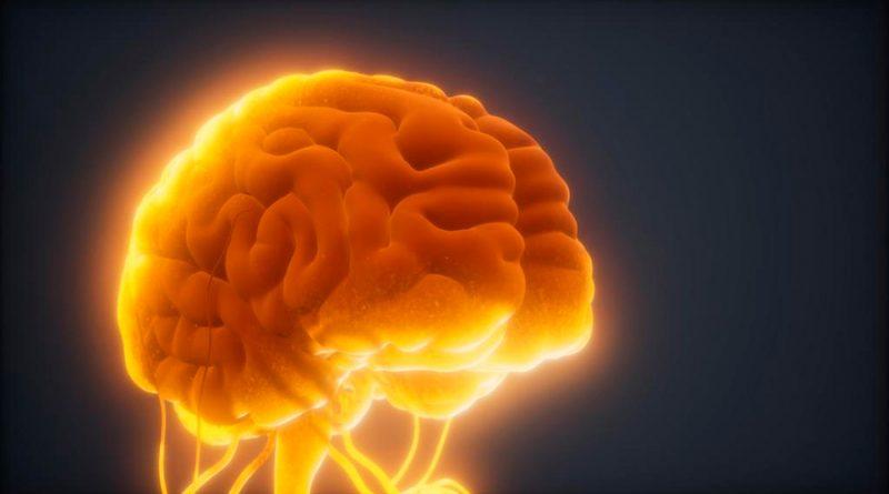 Diferentes tipos de onda combinan recuerdos e información nueva en el cerebro