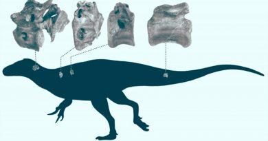 Nuevas especie de dinosaurio descubierta en la Isla de Wight