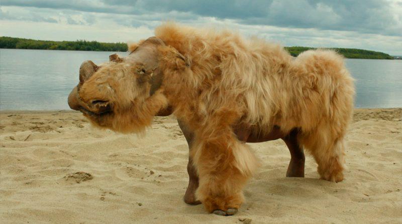 Genomas antiguos sugieren que los rinocerontes lanudos se extinguieron por cambio climático y no la caza excesiva