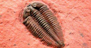 Trilobites tenían una vista similar a la de los insectos modernos