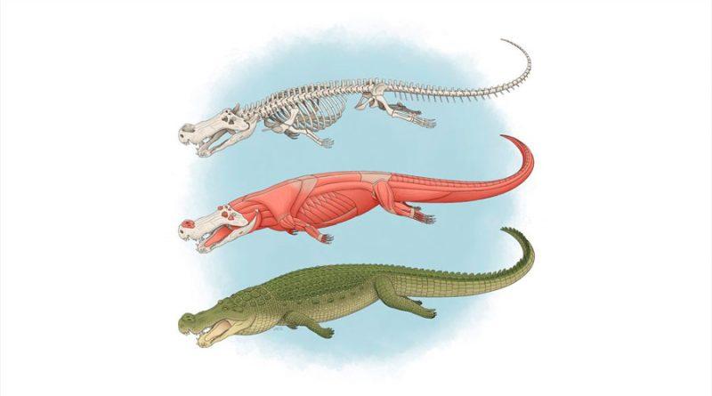 """Nuevos detalles sobre """"los cocodrilos del terror"""": eran gigantes con dientes del tamaño de un plátano"""