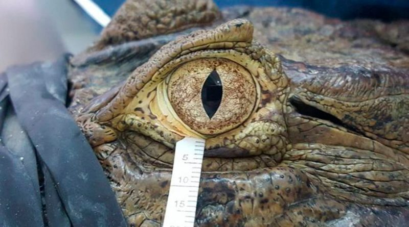 Las lágrimas de reptiles y aves se parecen a las humanas más de lo que se creía