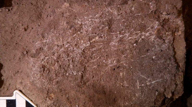 Encuentran una cama humana de 200.000 años de antigüedad hecha de hierba y ceniza