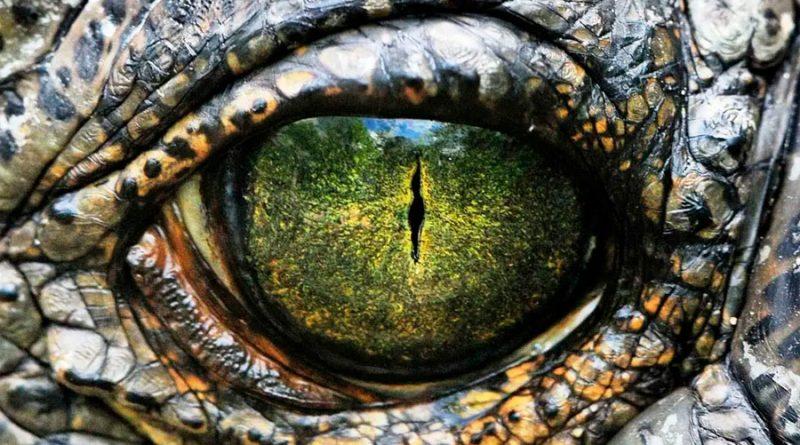 Sorpresa: revelan qué se esconde detrás de las verdaderas lágrimas de cocodrilo