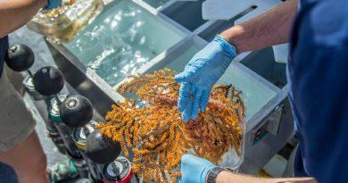 ¡Galápagos sorprende nuevamente al mundo: descubren 30 especies de invertebrados marinos!