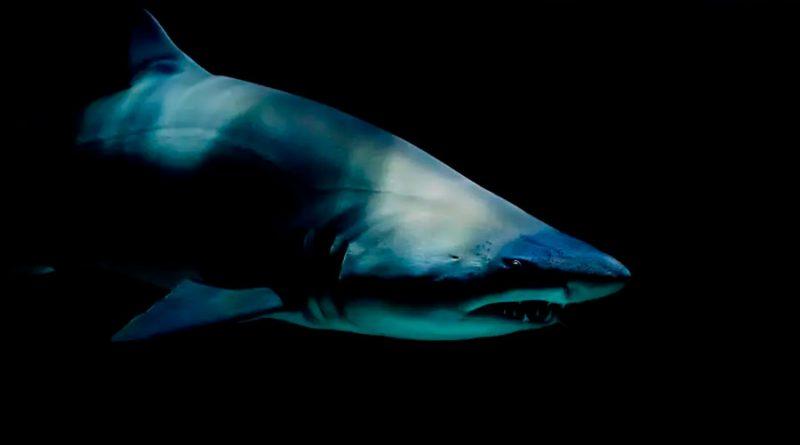 Una isla francesa cerró sus playas por los ataques de tiburones