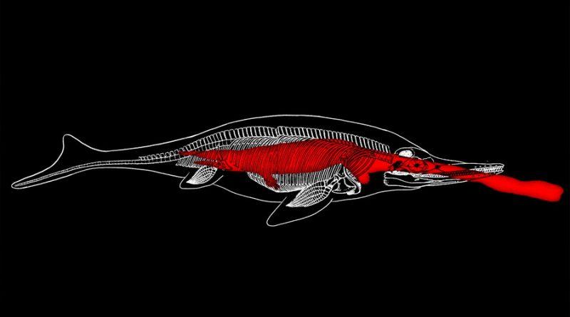 Increíble hallazgo del fósil de un monstruo marino en el estómago de otro aún más grande
