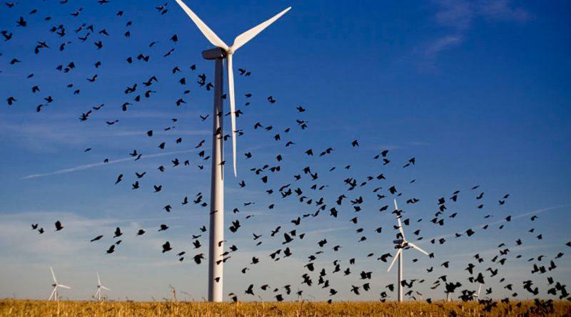 Medidas sencillas para evitar muertes de aves en parques eólicos