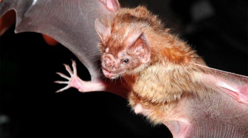 Los murciélagos hablan a sus bebés como los humanos