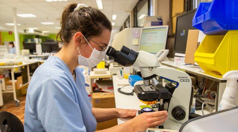 Diseñan una molécula que retrasa progresión del párkinson en ratones y monos