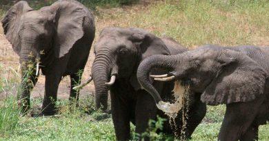 Mueren 12 elefantes en un parque de Zimbabue y aún no se sabe bien por qué