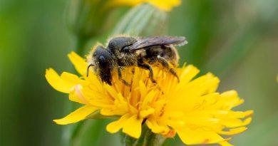 El veneno de las abejas es capaz de destruir las células agresivas del cáncer de mama