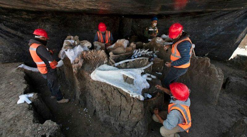 México: suman 200 mamuts los encontrados en Santa Lucía
