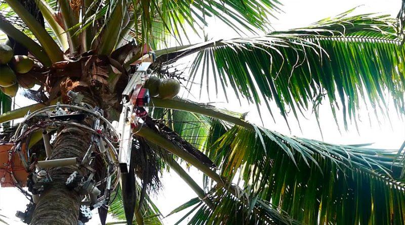 Amaran, el robot indio que trepa a los árboles para cosechar cocos