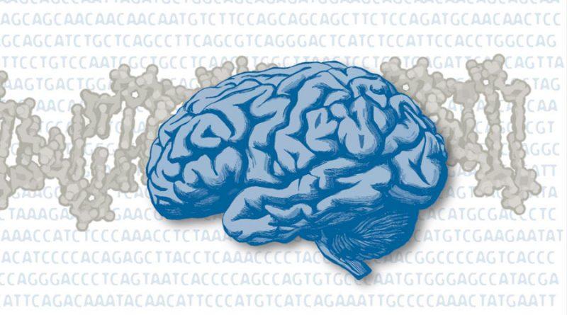 Investigadores descubren un circuito cerebral dañado por el aislamiento social en la infancia