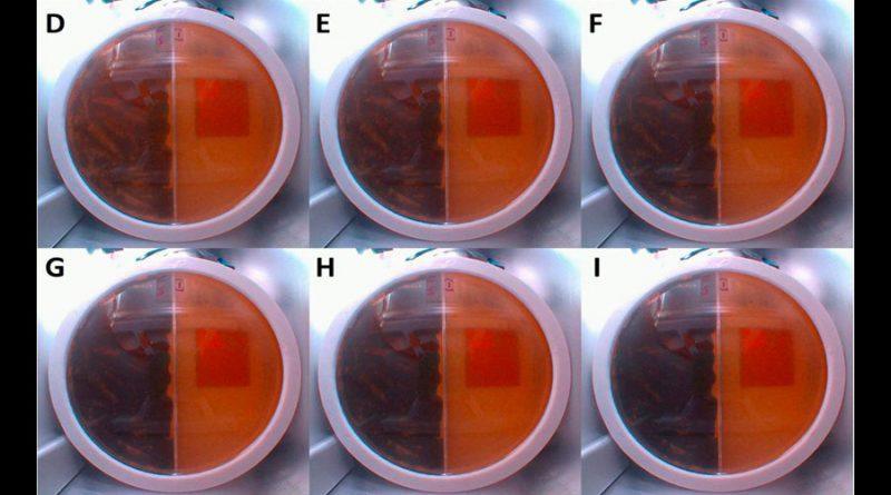 El hongo radiactivo de Chernóbil que podría protegernos cuando vayamos a Marte
