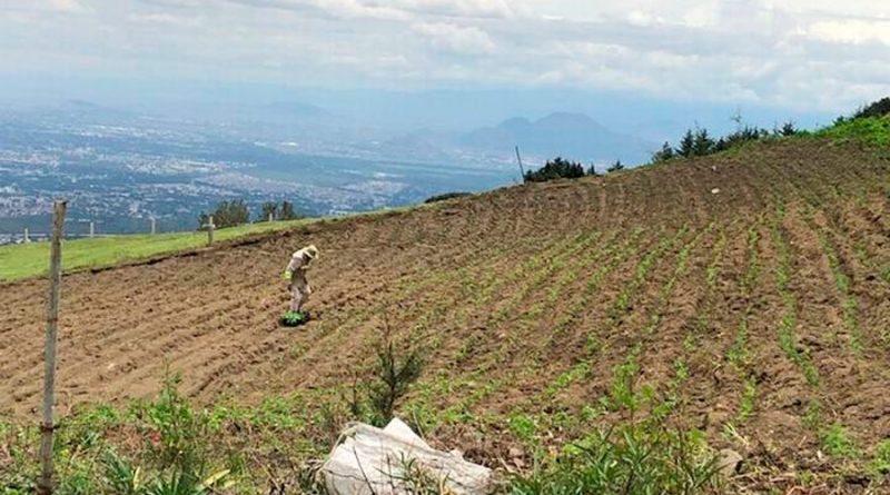 Los suelos y nuestra salud