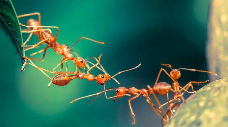 ¿Por qué las hormigas no mueren cuando caen desde muy alto, a diferencia del ser humano?