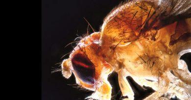 El sueño y las moscas