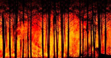 Temperaturas globales alcanzarán un nivel no visto en 50 millones de años