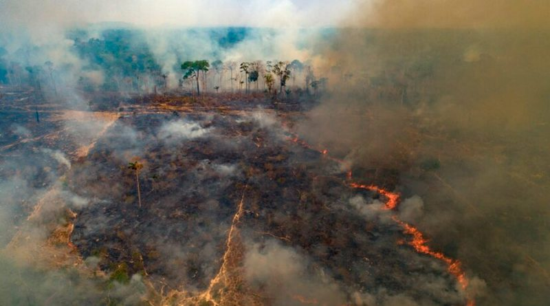 Incendio afecta un parque de Brasil con gran cantidad de jaguares