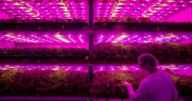 La humanidad busca nuevas formas de consumir y crecer sus alimentos. Ahora la empresa Pink Farms tiene la última tecnología Fuente: tecreview.tec.mx
