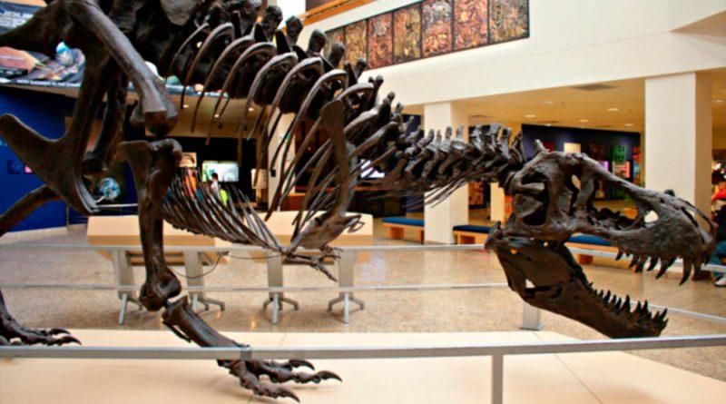 Subastarán esqueleto de T-Rex por 8 millones de dólares