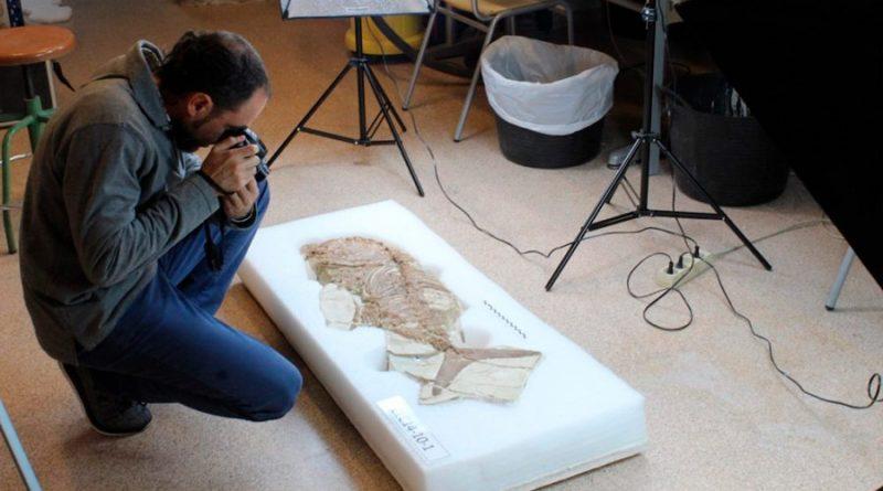 Descubierta una nueva especie de cocodrilo en los Pirineos gracias a un fósil robado de 71,5 millones de años