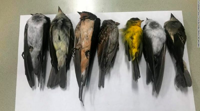 Cientos de miles de aves mueren repentinamente en Estados Unidos