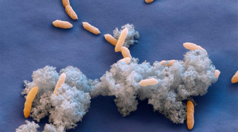 """Científicos descubren molécula que permite a las bacterias """"exhalar"""" electricidad"""