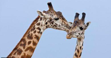 10 especies de animales que demuestran que ser gay es natural