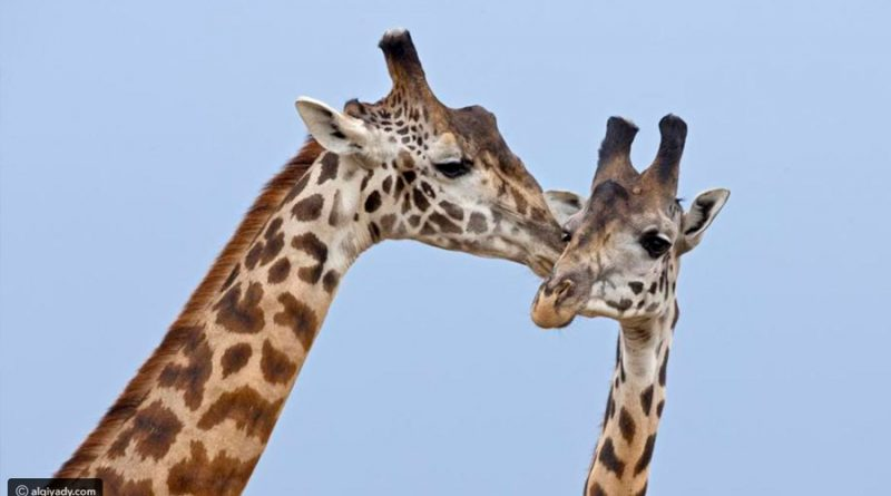 10 especies de animales que demuestran que ser gay es natural