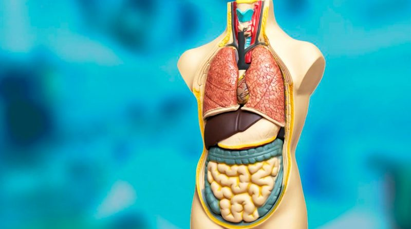 Fármacos rejuvenecen órganos de donantes de edad avanzada