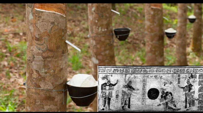 Desde el árbol del Caucho hasta los Plásticos bio-compostables: ¿Hacia dónde vamos?