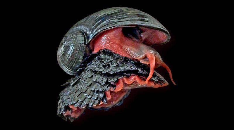 El caracol de patas escamosas, el único animal que tiene una auténtica armadura de hierro y se pega a los imanes