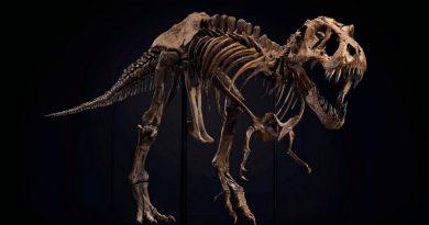 Se subasta el esqueleto completo del T-Rex más famoso del mundo, y esperan venderlo por 8 millones de euros