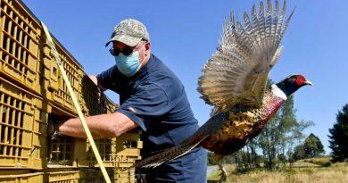 Hasta 850 mil virus desconocidos en aves y mamíferos podrían dar el salto a los humanos