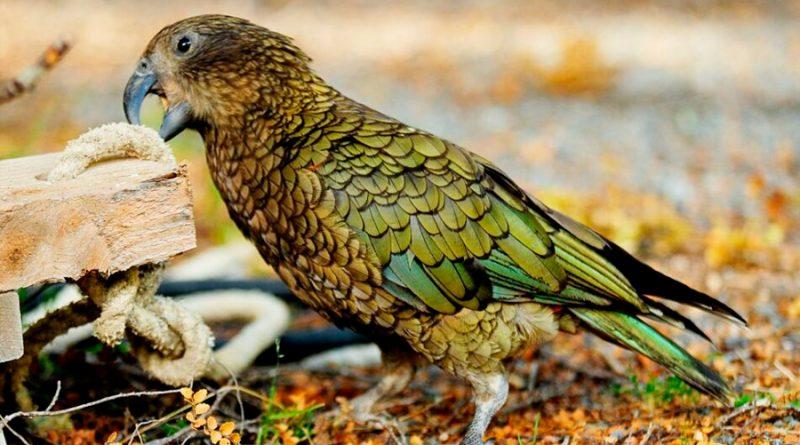 Descubren la estructura cerebral que haca a las aves super inteligentes