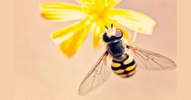 Las abejas analizan patrones visuales y manejan el aprendizaje estadístico